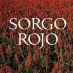 sorgo-rojo-190x300