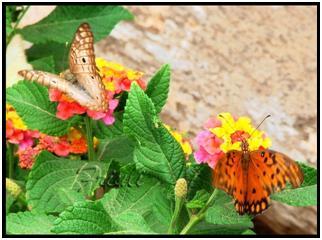 diversidad de Fanerógamas  (plantas con flores)